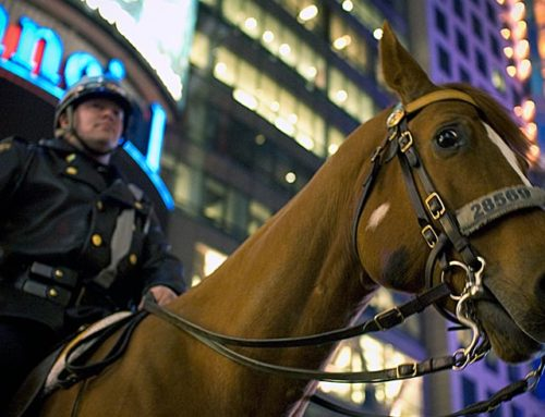 Recent Assault of a Police Horse Illustrates Special Protections for Police Animals