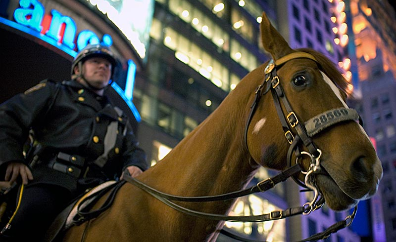 Police animals, such as horses ridden by mounted police, are specifically protected by California law.